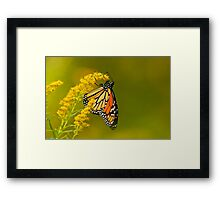 Monarch Butterfly - 22 Framed Print