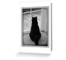 Black Cat looking for squirrels Greeting Card