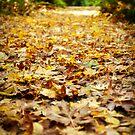 Along the yellow leaf road by Jodi Morgan