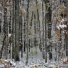 A Stand of Trees in the First Snow by Debra Fedchin