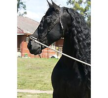 Wizzard - proud stallion Photographic Print