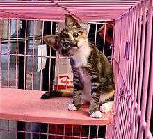 Hello Kitty by karaisrad