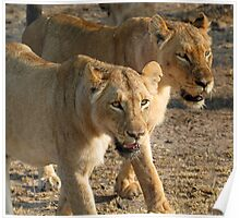 Lionesses on a mission! Poster