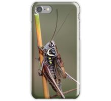 Roesel's Bush Cricket iPhone Case/Skin