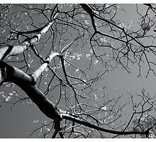 Spirit of Tree - Glebe NSW Australia by sdand