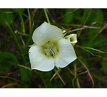 White Among Green Photographic Print