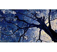 Infrared Tree Photographic Print