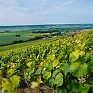 Champagne, France by Melissa Fiene