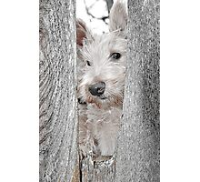 Scottie Security Photographic Print