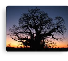 Boab Tree Silhouette at Sunset - Western Australia Canvas Print