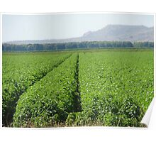 Crop that - Kununurra WA Poster