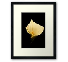 A beautiful lily Framed Print