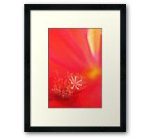 Flower-close-up Framed Print