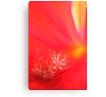 Flower-close-up Canvas Print