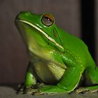 White lipped Green Tree Frog  by Bruce Westendorf