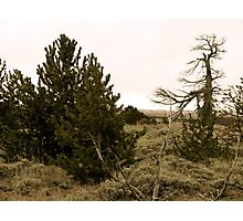 Medicine Bow Christmas Tree #1 Photographic Print