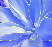 Blue Agave #2 by Diamond8