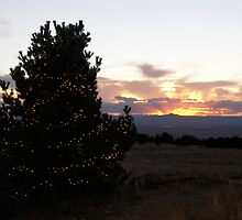 Medicine Bow Christmas Tree #3 by Paul Simms