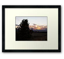 Medicine Bow Christmas Tree #3 Framed Print