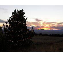 Medicine Bow Christmas Tree #3 Photographic Print