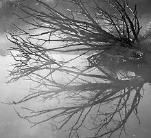 Damn Reflections in black & white by MIchelle Thompson
