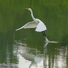 White Heron by bobby1