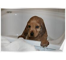 Oh No It's Bath Time Poster