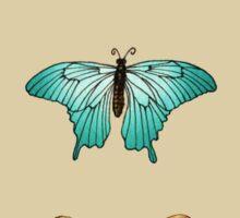 Entomology studies Butterflies Sticker