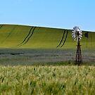 Crop Lines by Suellen Cook