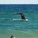 Southern Right Whale by Brad Francis