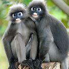Dusky Leaf Monkeys by Brad Francis