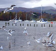 windermere with the bird! by snapitnc