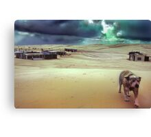Tin City Dog, New South Wales, Australia Canvas Print