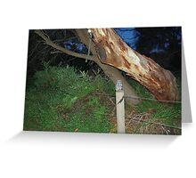 Tawny Frogmouth Owl - Coles Bay Greeting Card