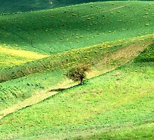 Alone in a Tuscan Valley-Siena by Deborah Downes
