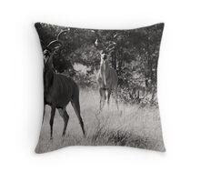 Proud Kudu, Etosha National Park Throw Pillow