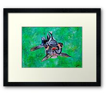 Blackmoor Goldfish Framed Print