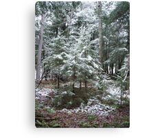 First Dusting Canvas Print