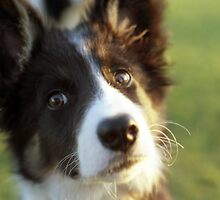 Puppy Bob by Michael Haslam