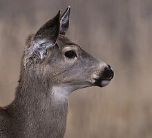 Yearling Doe by Rodney55