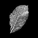Leaf by BlaizerB