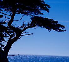 Lone Cypress tree by Alain Robillard