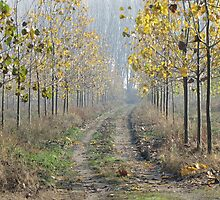 Road to Autumn - One by branko stanic