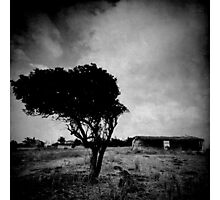 abandoned tree I Photographic Print