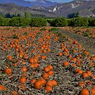 Bountiful Harvest by Ann J. Sagel