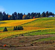Late Summer at the Winery by Kathleen Jones
