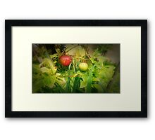 First Fruits Framed Print