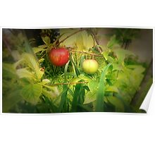 First Fruits Poster