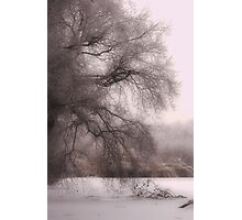 Pink Frost Photographic Print