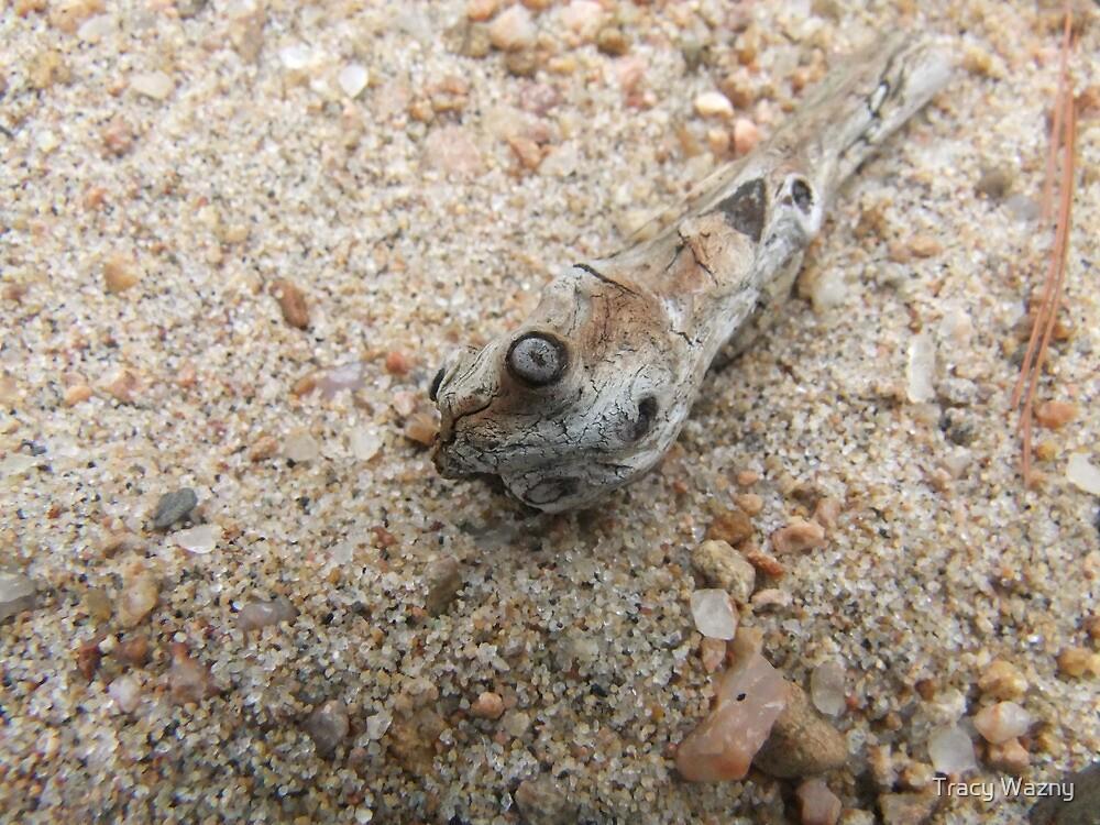 Snake Head Driftwood by Tracy Wazny